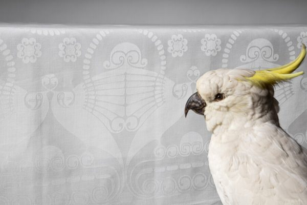 Damast met daarvoor een opgezette vogel